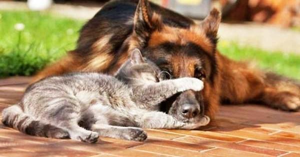 Εγκεφαλικό στον σκύλο και στην γάτα