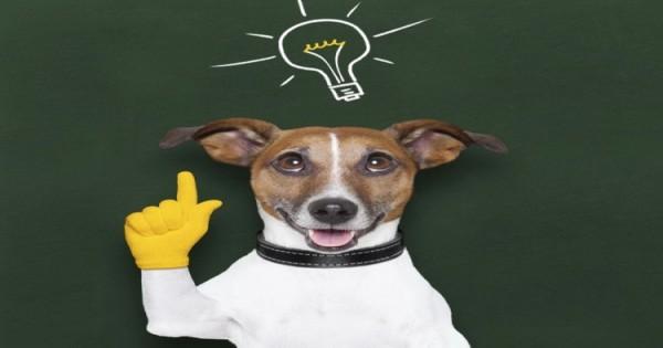 Τεστ: Είναι έξυπνος ο σκύλος;