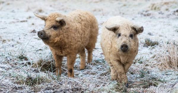 10 πραγματικά μοναδικά ζώα που δεν θα πιστεύετε πως υπάρχουν αλήθεια. (Εικόνες)
