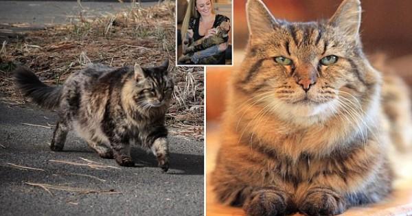 Αν ήταν Άνθρωπος, θα ήταν 121 χρονών! Πρόκειται για την Γηραιότερη Γάτα του Κόσμου! (Βίντεο)
