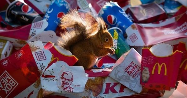 Άγρια ζώα «συμβιώνουν» με σκουπίδια (Εικόνες)