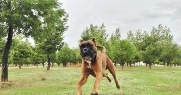 Ο σκύλος μπορεί να καταλάβει αν είσαι χαρούμενος ή λυπημένος, λένε οι έρευνες