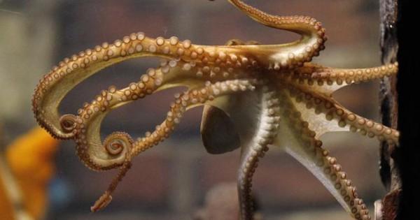 Περίεργες αλήθειες για τα θαλάσσια ζώα
