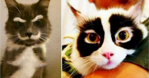 Φωτογραφίες από 14 χαριτωμένες γάτες που θα σας κλέψουν αμέσως την καρδιά!