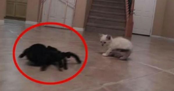 Ήθελε να τρομάξει μια γατούλα με μια αράχνη… αυτό που συνέβη ήταν πολύ αστείο