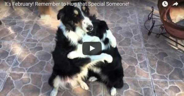 Ένα πολύ γλυκό βίντεο: Δύο σκυλάκια αγκαλιάζονται σαν άνθρωποι!