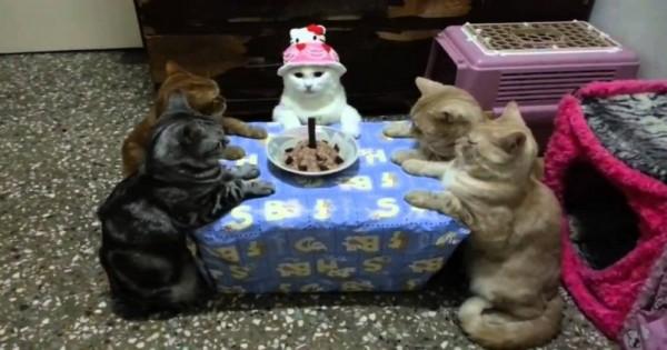 Δεν θα πιστεύετε το πως γιόρτασε τα γενέθλιά της αυτή η φρόνιμη γάτα!