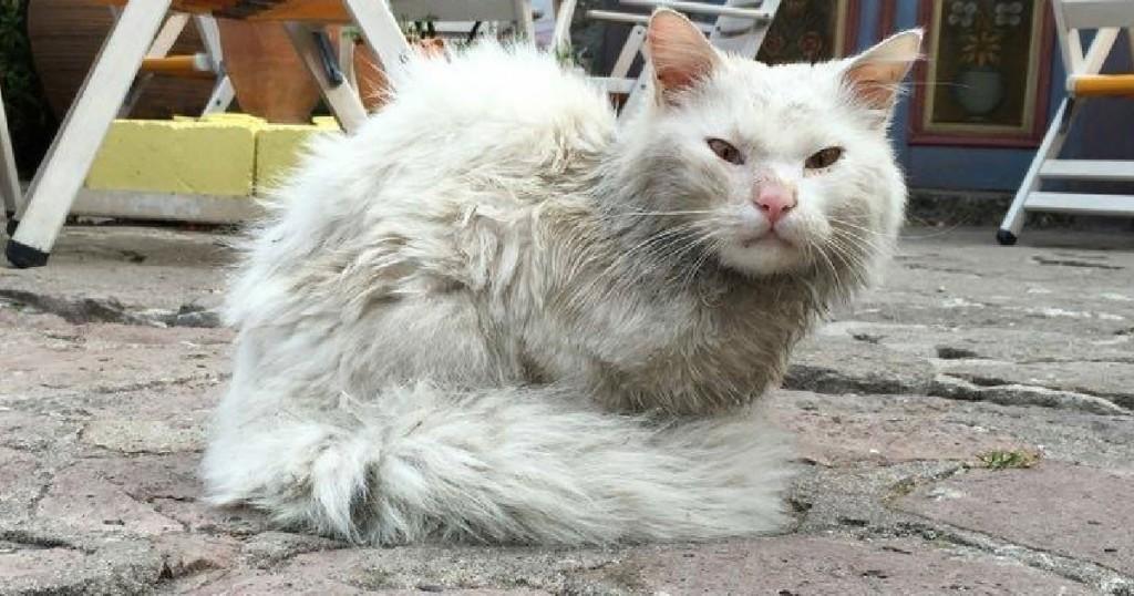 Λέσβος Κουνκούς γάτος
