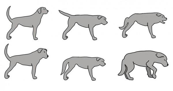 11 μυστικά που κρύβει η κίνηση της ουράς ενός σκύλου που όλοι πρέπει να γνωρίζουμε