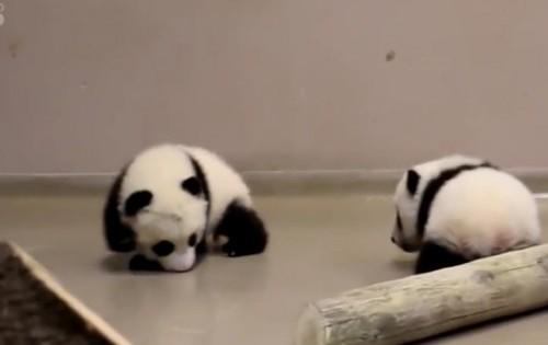 Δύο αξιολάτρευτα μωρά πάντα κάνουν τα πρώτα τους βήματα και ξετρελαίνουν το ίντερνετ (βίντεο)
