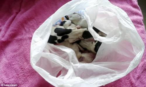 φόλα σκυλίτσα κουτάβια Δηλητηρίαση σκύλων