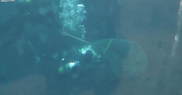 Πολύ σκληρές εικόνες: Καρχαρίας επιτίθεται σε δύτη ενυδρείου