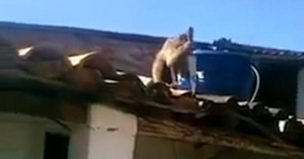 Βίντεο: Μεθυσμένος πίθηκος κυνήγησε τους θαμώνες ενός μπαρ με μαχαίρι 30 εκατοστών