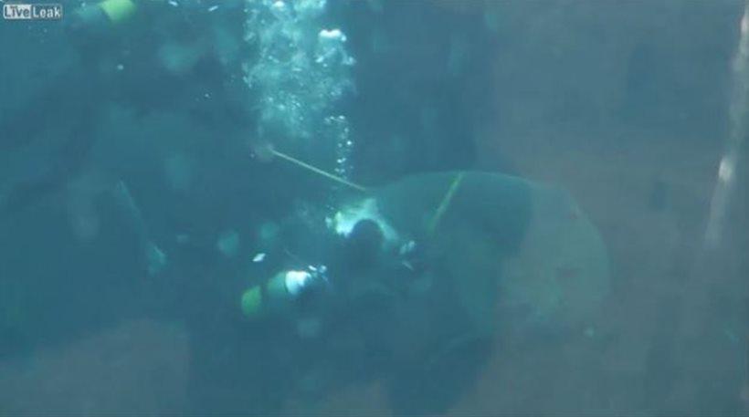 καρχαρίας δύτης ενυδρείου