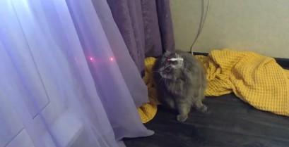 Όταν δεν έχεις χρόνο να παίξεις με τη γάτα σου