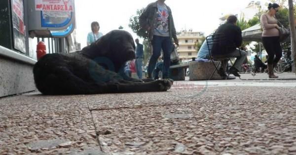Έριξαν φόλες στον χώρο του Δήμου Καλαμάτας που φιλοξενούνταν αδέσποτα ζώα!