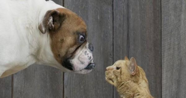 Έρευνα: Ποιος μας αγαπά περισσότερο; Η γάτα ή ο σκύλος;