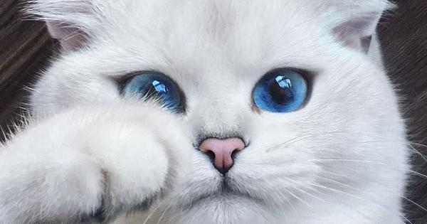 Αυτή η γάτα έχει τα ομορφότερα μάτια που έχετε δει ποτέ! (εικόνες)