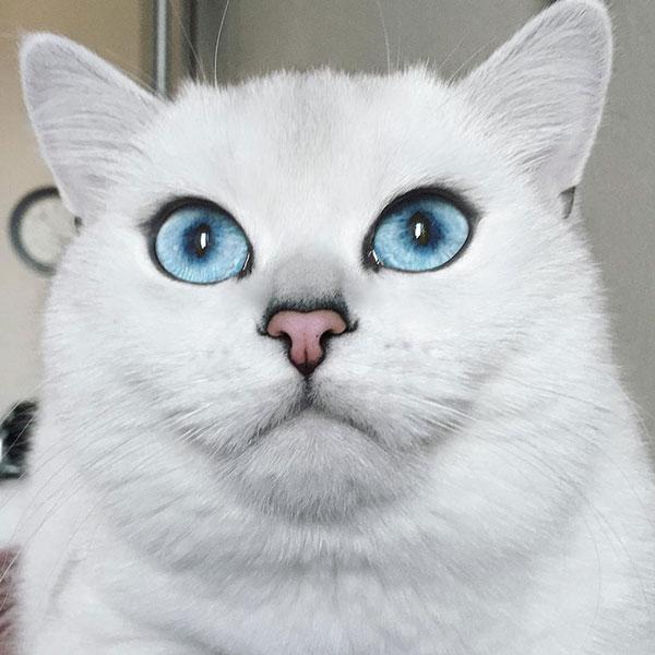 μάτια Γάτα