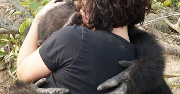 Η θλιβερή ιστορία του πιο μοναχικού χιμπατζή στον κόσμο