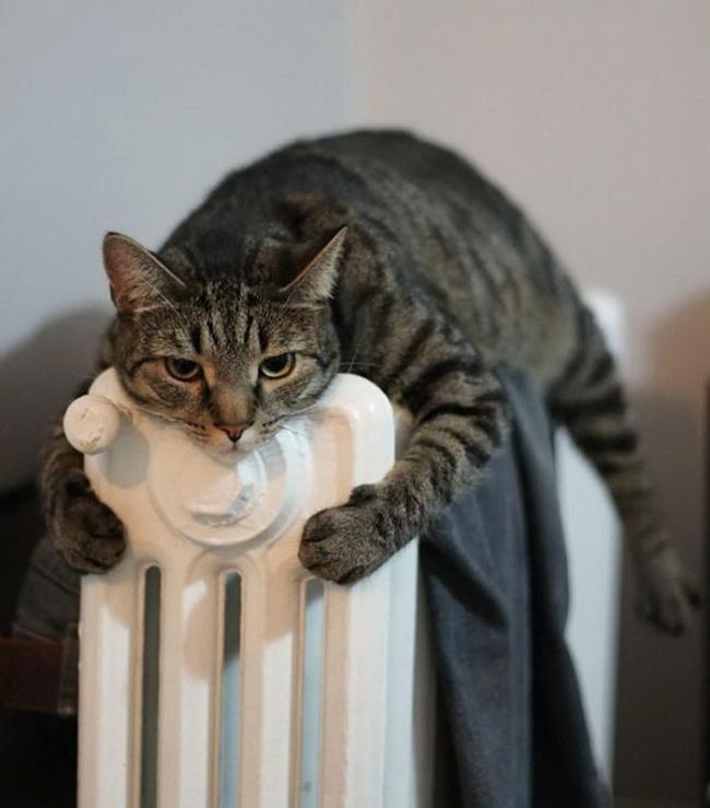 ζωάκια ζέστη