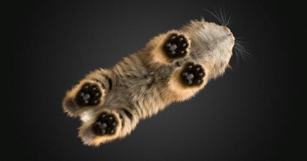 15 συνηθισμένα ζώα, όπως δε τα έχετε ξαναδεί!