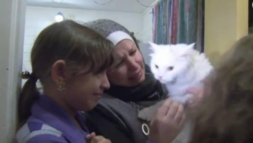 οικογένεια γάτος