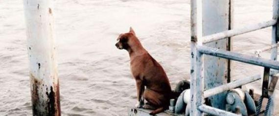 Πραγματική αγάπη: Αυτή η σκυλίτσα περίμενε την οικογένειά της επί ένα μήνα σε μια προβλήτα!