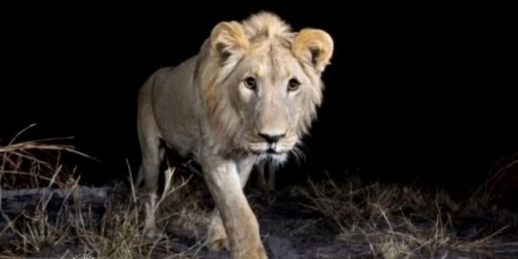 ζώα Αφρίκης