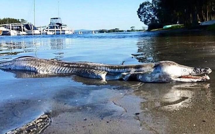 θαλάσσιο πλάσμα Αυστραλία