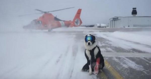 Ο πιο cool σκύλος που έχετε δει ποτέ – Δείτε που εργάζεται και γιατί φοράει μάσκα του σκι!