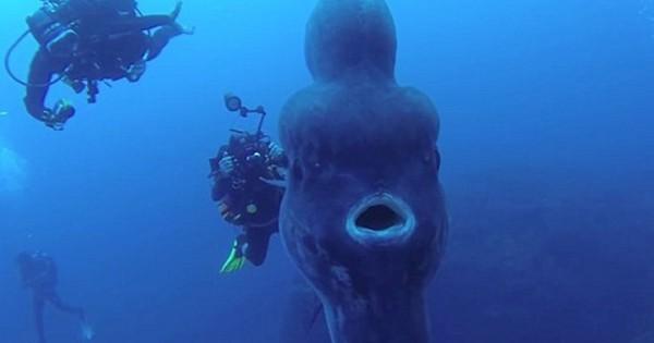 Δύτες συνάντησαν το σπανιότερο ψάρι στον κόσμο (φωτογραφίες, βίντεο)