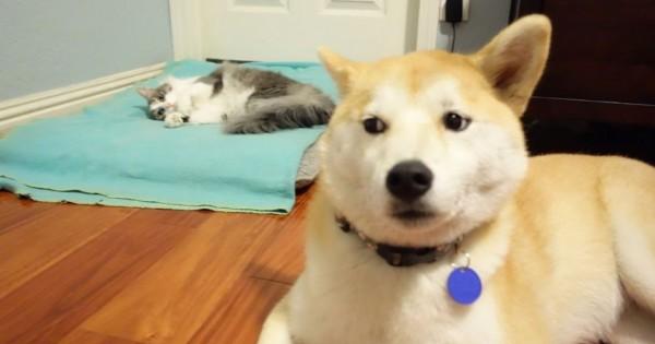 23 απελπισμένοι σκύλοι που βρήκαν τη γάτα να κοιμάται στο κρεββάτι τους
