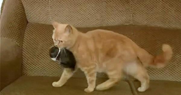 Δε θα πιστέψετε τι συνέβη όταν μια γάτα βρίσκει ένα ορφανό λαγουδάκι! (Βίντεο)
