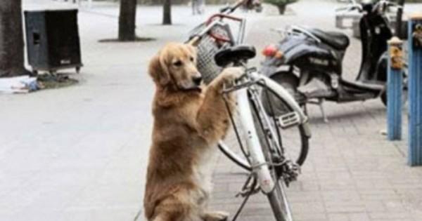 Σκύλος φυλάει το ποδήλατο του ιδιοκτήτη του ενώ στο τέλος ανταμείβεται… [βίντεο]