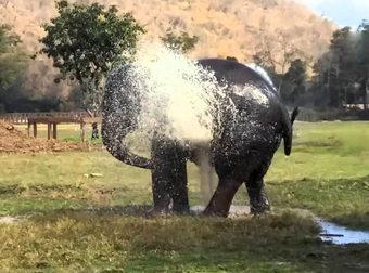 Ελέφαντας σπάει έναν ψεκαστήρα και κάνει αυτό που όλοι περιμένουμε! (Βίντεο)
