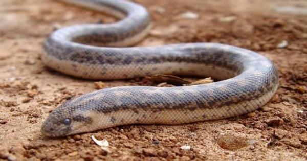 Δείτε την τρομακτική επίθεση από φίδι σε αργή κίνηση… [βίντεο]