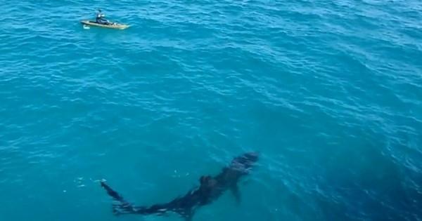 Όταν σε πλησιάζει ένας γίγαντας των θαλασσών (Βίντεο)