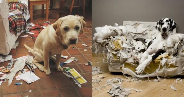 21 «Αθώα» Σκυλιά, που Δεν έχουν Ιδέα από που Προήλθε το Χάος (Εικόνες)