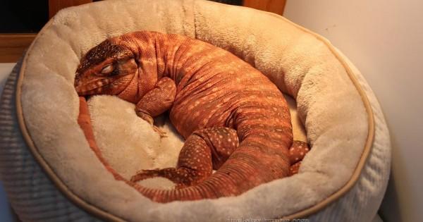 25 πολύ περίεργα ζώα που σίγουρα δεν έχει δει αλλά ούτε ξανακούσει! (Εικόνες)