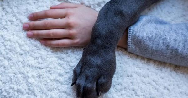 Ο σκύλος που καθόταν πάντα στα δεξιά ενός αγοριού – και φαίνεται πως είχε λόγο