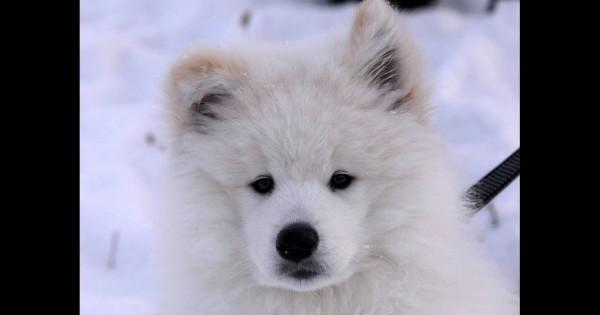 Σιβηρία: Αγώνες με τα πανέμορφα Χάσκι (Εικόνες)