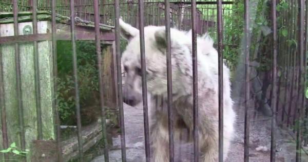 Απίστευτη μεταμόρφωση κακοποιημένης αρκούδας (Βίντεο)