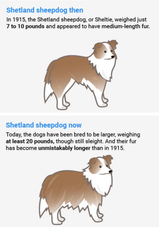 σκύλοι