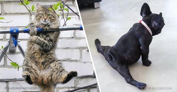 15 εντυπωσιακά ζώα που ξέρουν καλά πως να μένουν σε φόρμα! (Εικόνες)