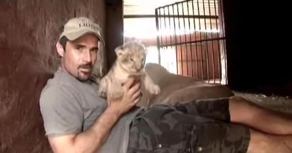 Αυτός ο άνθρωπος πήρε αγκαλιά ένα νεογέννητο λιονταράκι και η αντίδραση της μητέρας του εξέπληξε τους πάντες! (Βίντεο)