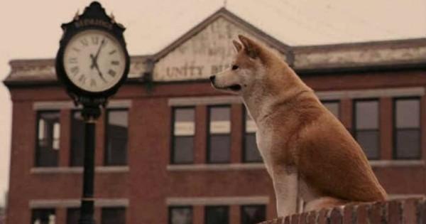 Χάτσικο: Η ιστορία του σκύλου που έγινε ιαπωνικό σύμβολο πίστης και παντοτινής φιλίας [φωτό]