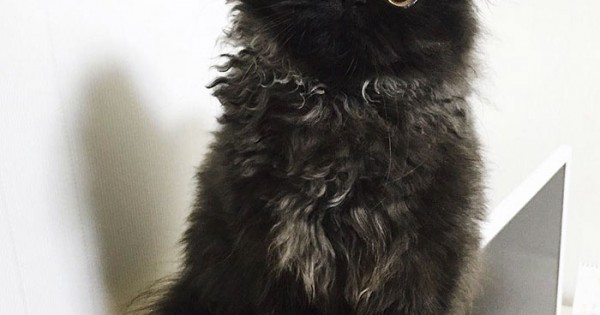 Gimo, ο Γάτος με τα μεγαλύτερα Μάτια στον Κόσμο! (Εικόνες)