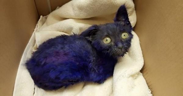 Η σοκαριστική ιστορία της μοβ γάτας που συγκίνησε το ίντερνετ (Εικόνες)