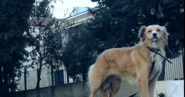 Η Φόξι ζει εγκαταλελειμμένη στην αυλή του Νοσοκομείου Χανίων. Περιμένει ακόμα το αφεντικό της. (Βίντεο)